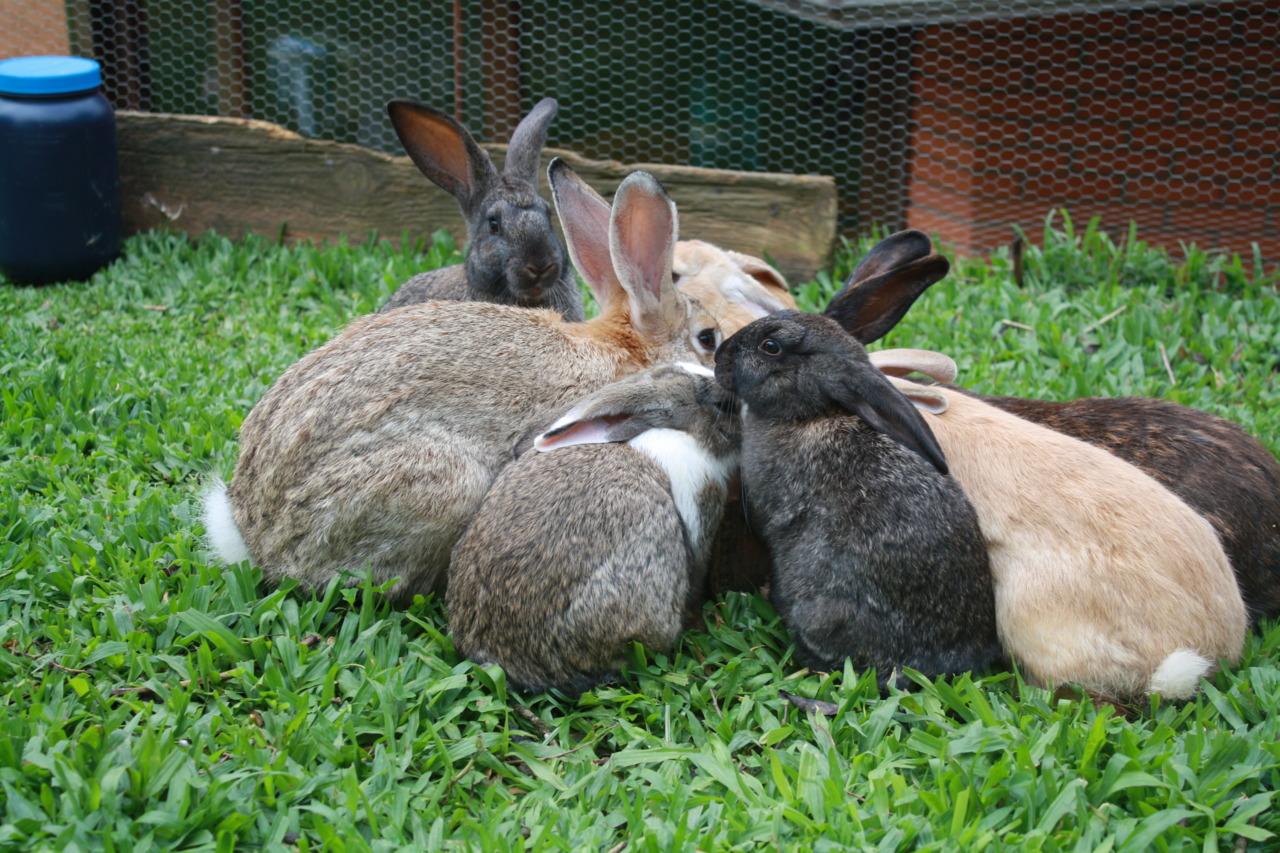 Dinnertime for Bunny Family