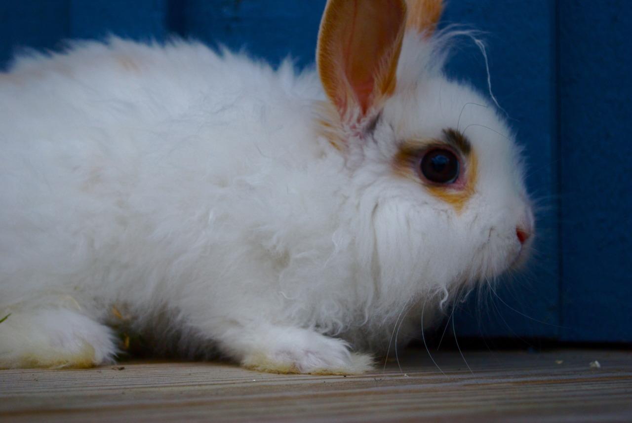 Bunny Has Tiny Dreadlocks