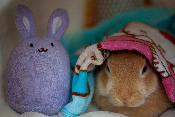 Bunny Plays Hide-and-Seek with Friend