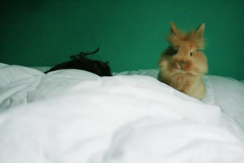 Bunny Wants You to Wake Up Already