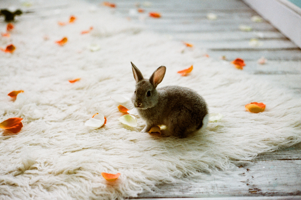 Bunny on Rug with Flower Petals