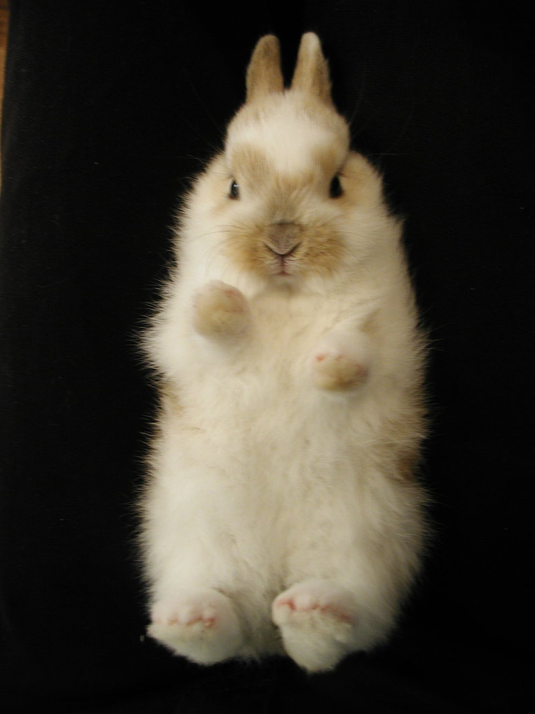 Bunny Poses with Paws in the Air