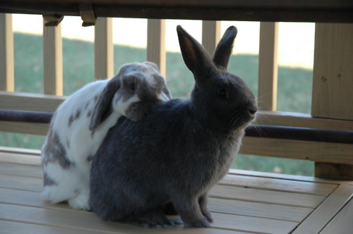 A Quiet Display of Affection