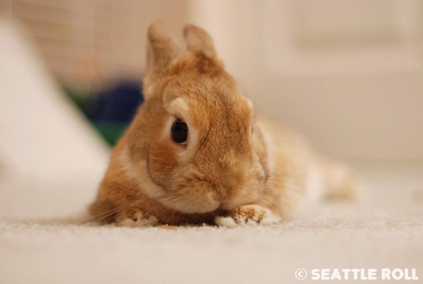 Bunny Has a Coy Look