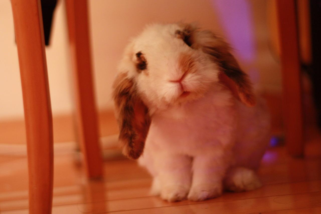 Fuzzy Bunny Looks Like a Toy