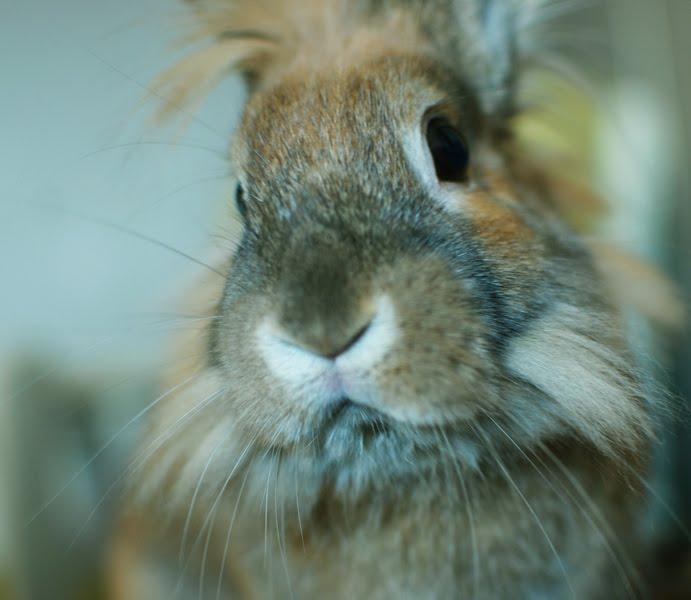 Bunny Says How YOU Doin'?