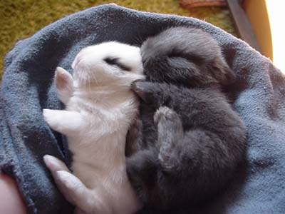 Bunnies Cuddle and Nap