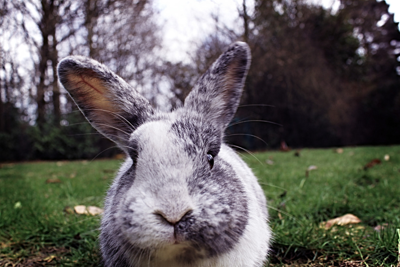 No Access to the Yard Without Paying the Bunny