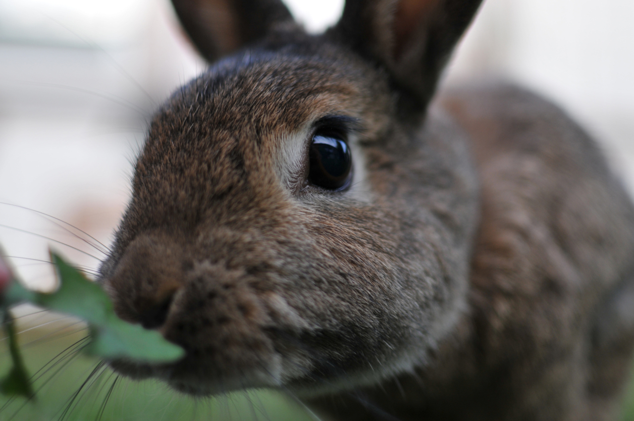 Bunny Comes Over for Some Greens