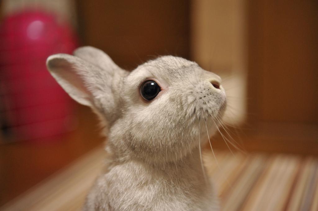 Bunny Hopes for a Treat