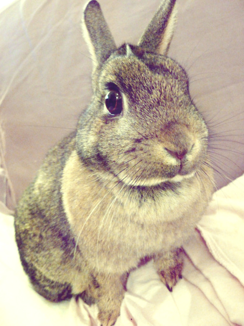 Bunny Poses