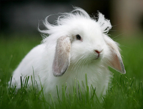 Bunny's Hair Floats in the Breeze