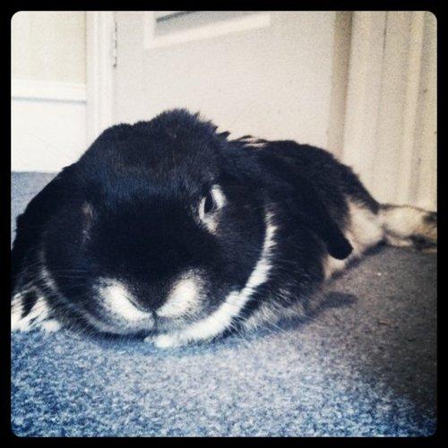 Bunny on a Lazy Sunday Morning