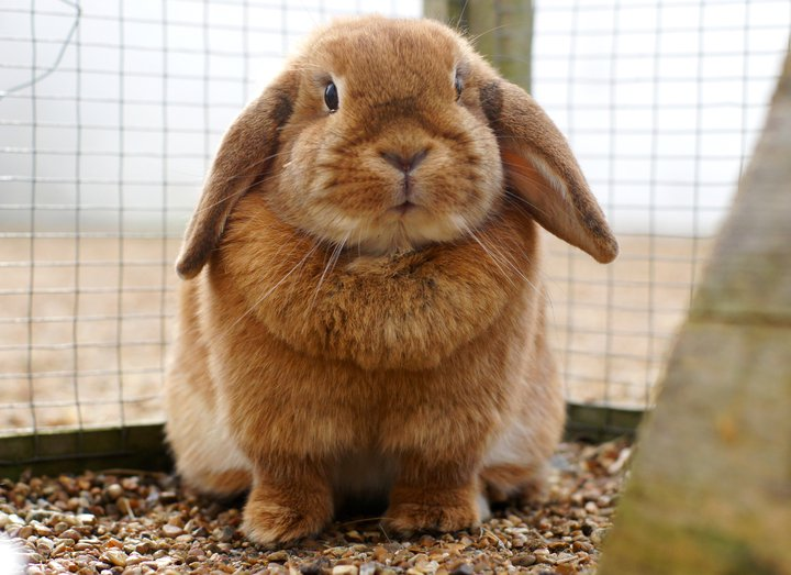 Bunny Is a Little Round Fluffball
