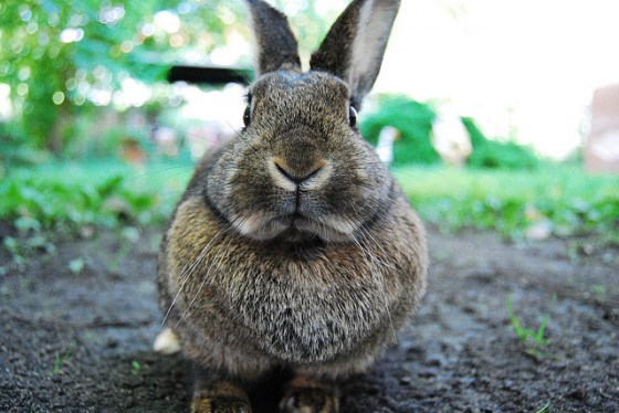 You Must Pay the Bunny Toll Before Entering the Garden