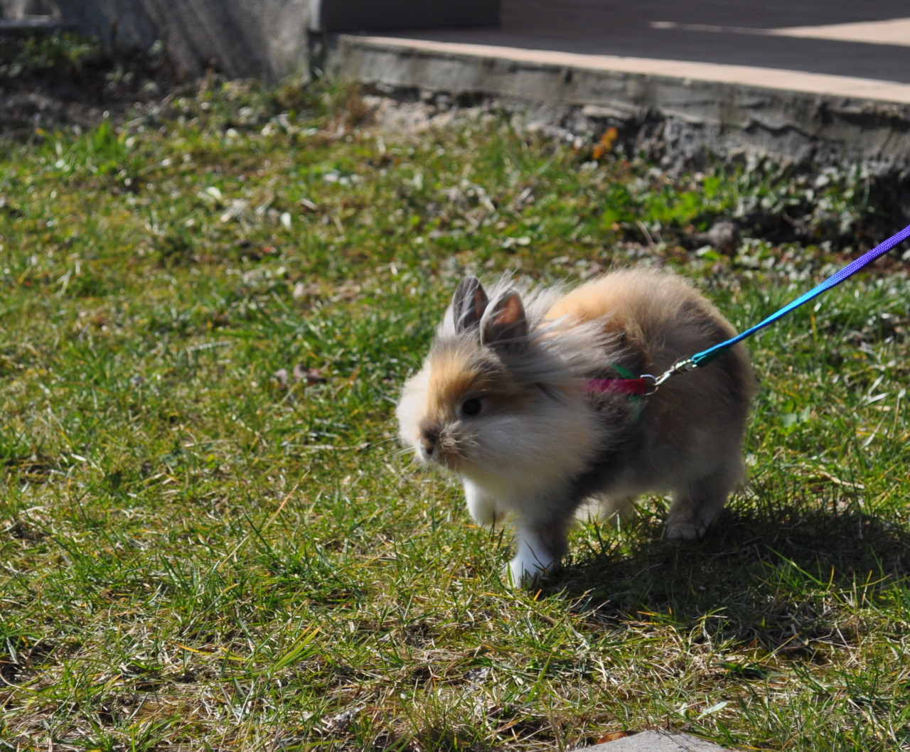 Bunny Goes on a Spring Romp