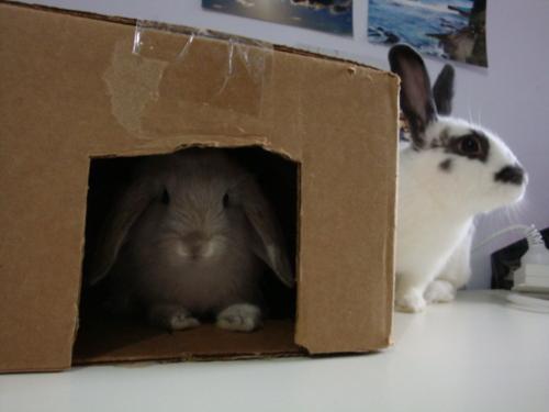 Bunnies Play Hide-and-Seek