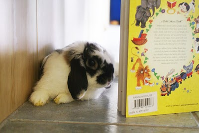 Bunny Relaxes with a Book