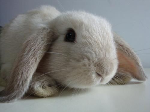 Bunny Looks Super-Cuddly
