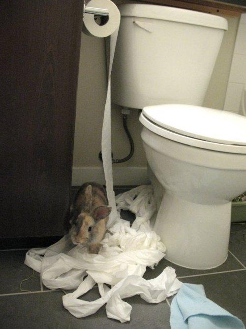 Bunny Swears He's Innocent