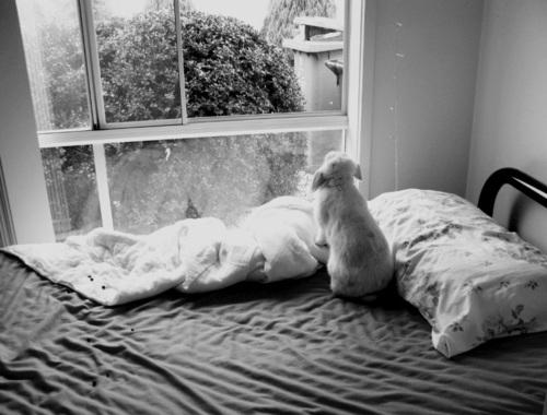 Bunny Gazes Out the Window