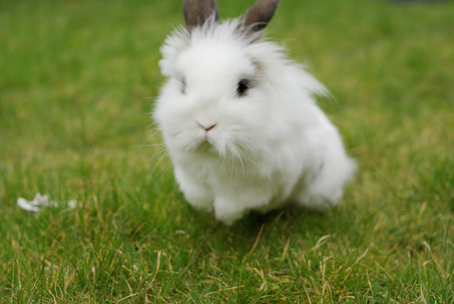 Bunny Goes for a Run