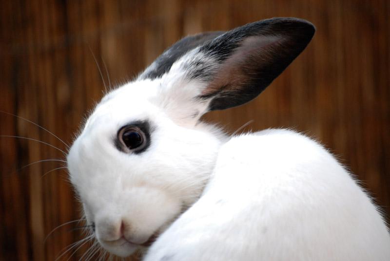 Bunny Caught Mid-Groom