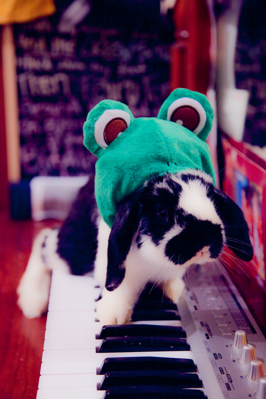 Frog Bunny Plays the Piano