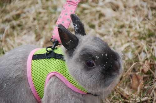 Bunny Experiences Snow for the First Time