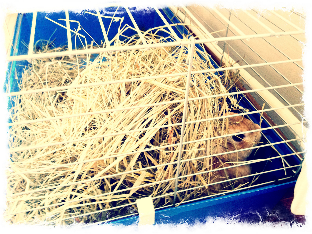Bunny Hides out under His Hay