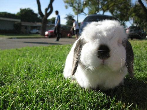 Disapproving Bunny Disapproves