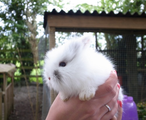 Round Fluffy Bunny Has a Round Fluffy Face