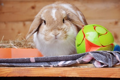 Goalie Bunny Is Not Impressed with Your Kicking Technique