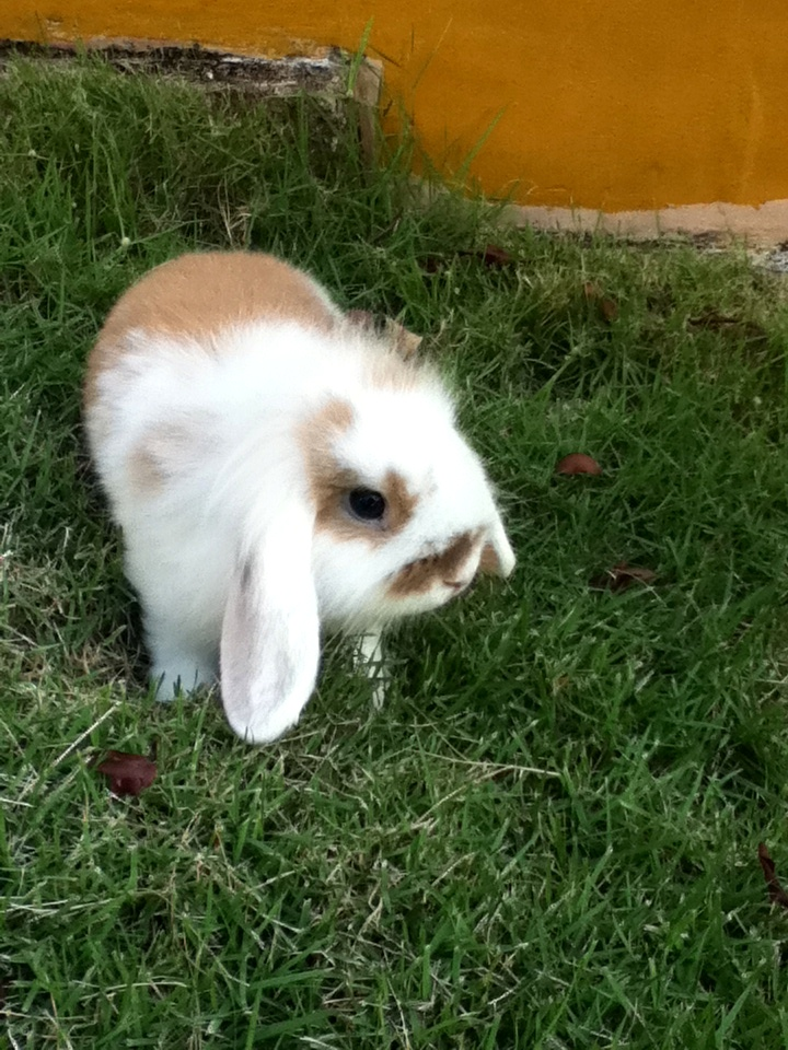 Little Bunny in the Grass