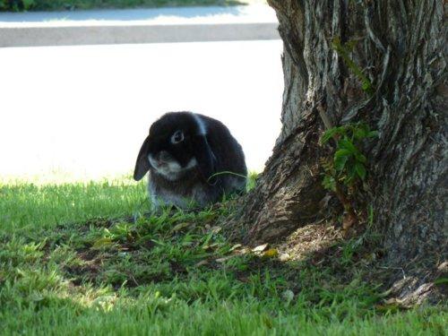 Bunny Says This Tree Tastes Funny