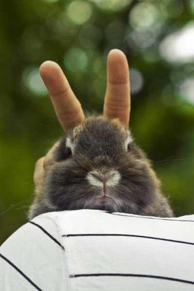 Bunny Gets the Rabbit Ears Treatment