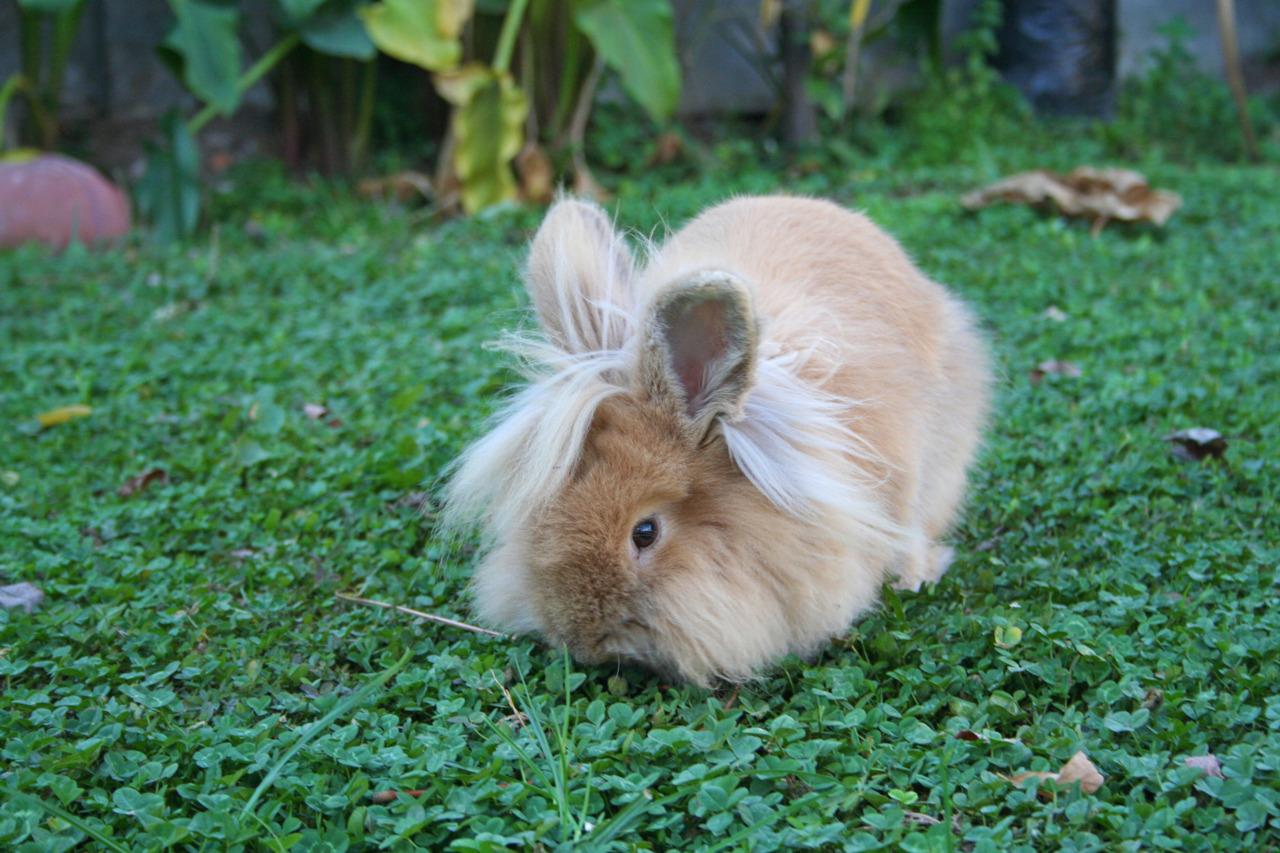 Bunny Enjoys the Summer Garden