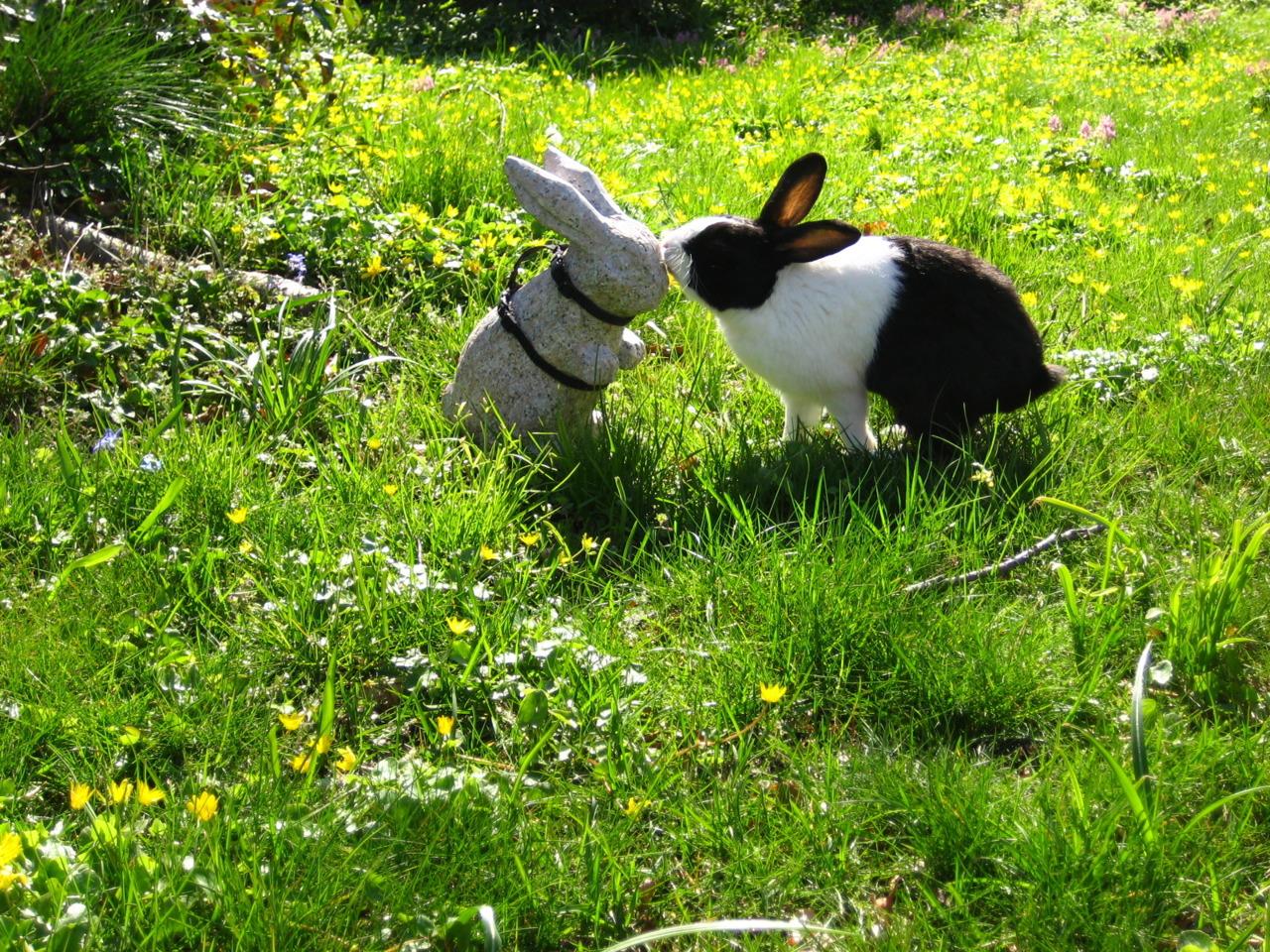 Romantic Bunny Hopes a Kiss Will Turn the Stone Bunny Real