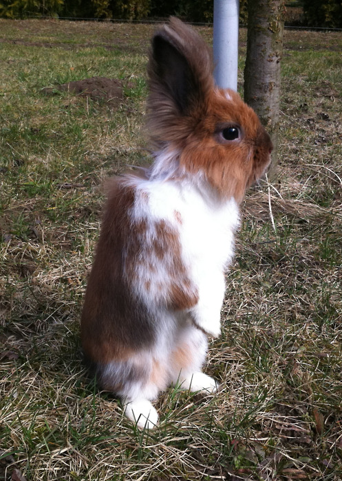 Bunny Stands Up Tall