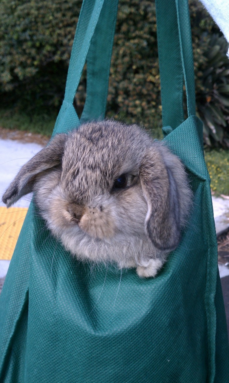Stowaway Bunny WILL Find a Way to Get to the Farmers' Market