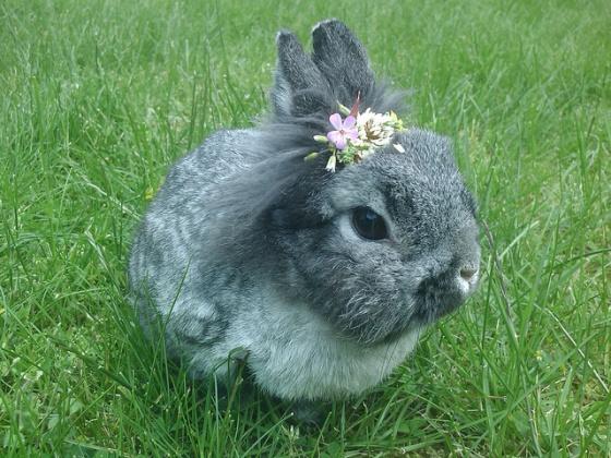 San Franciscan Bunny Followed The Mamas & the Papas' Advice
