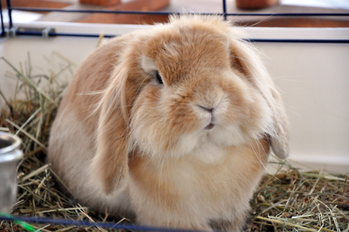 Bunny Says This Hay Is All Mine. You Don't Even Eat It Anyway.