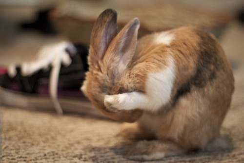 Oh No! I Can't Believe I Left That Carrot Where Hoomin Could Get It!