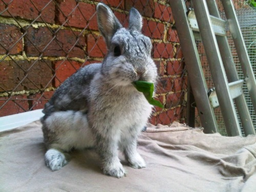 Public Service Announcement Bunny Reminds You to Eat Your Greens