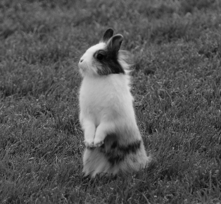 Bunny Has Excellent Posture