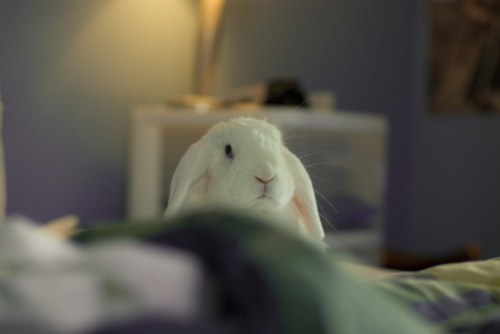 Bunny Hops Up to See If You're Awake Yet