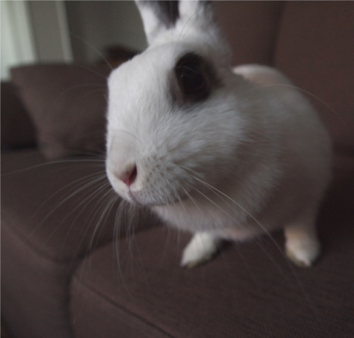 Interrogator Bunny Is Skeptical of Your Claims as to Where You Put That Carrot