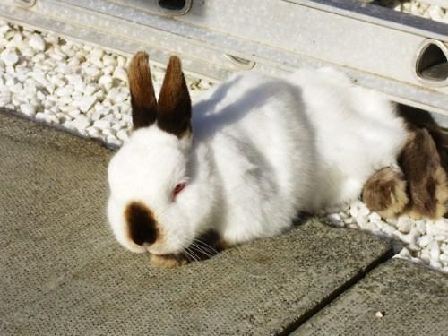 Bunny Naps in the Sunshine
