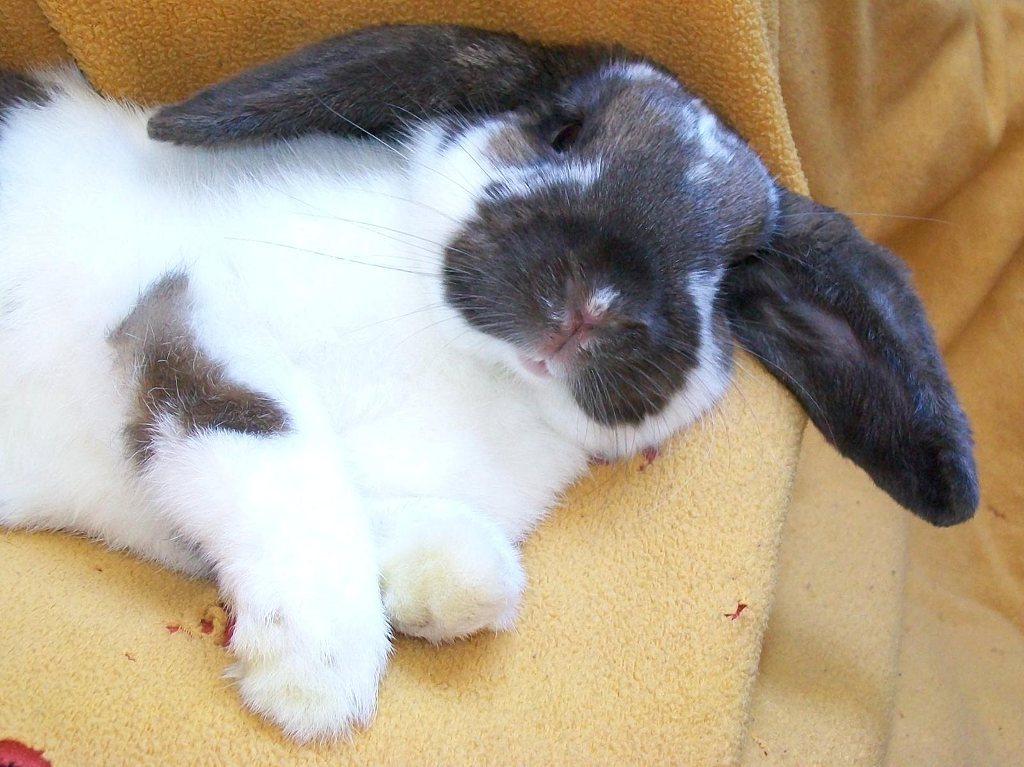 Model Bunny Strikes a Pose