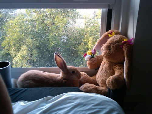 Bunny Hangs Out with His Stuffed Friend